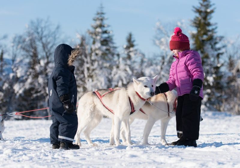 Two children pat a sled dog in snowy landscape in Vemdalen